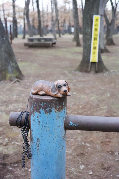 繋がれた犬