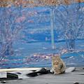 Photos: 畑の猫