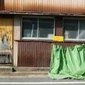 写真: 黄色と緑
