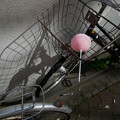 写真: 風船