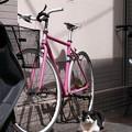 猫と自転車