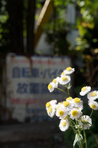 街角に咲く