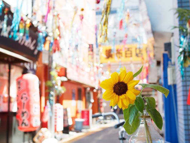 七夕と向日葵