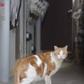 写真: 廊下の猫
