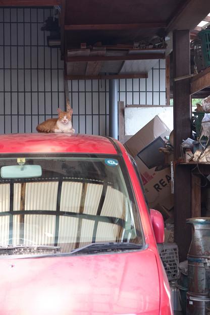 赤い車の主