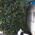植込みの猫