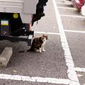 写真: 駐車場の猫