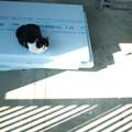 Photos: 影猫