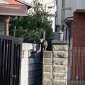 Photos: 猫道