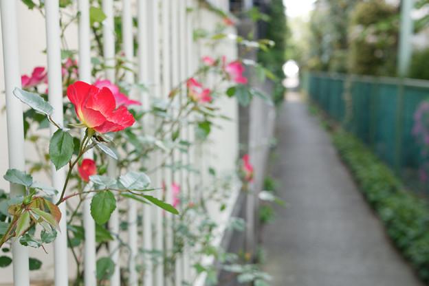 花咲く小路