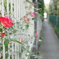 Photos: 花咲く小路