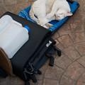 Photos: コンパクトな猫