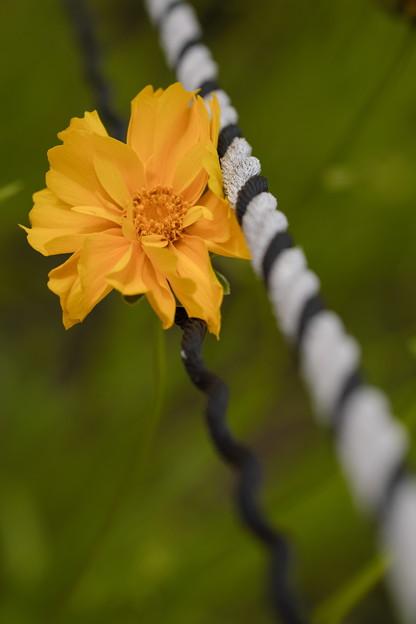 Photos: 橙