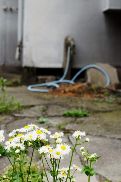 花とホース