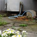 Photos: 花とホース