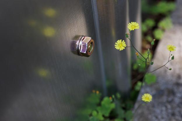 ナットと花