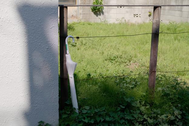空き地の傘