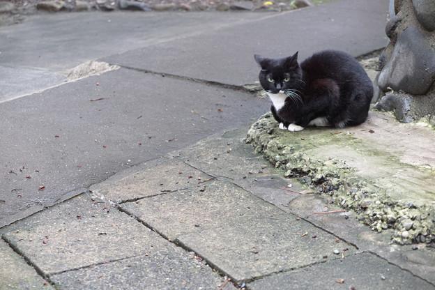 曲がり角の猫