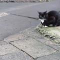 Photos: 曲がり角の猫