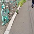 Photos: うつむき加減
