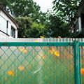 Photos: フェンスの向こう