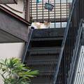 Photos: 階段の上