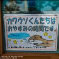 写真: katurahama140525008