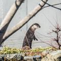 Photos: fukushima151220172