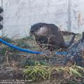 Photos: fukushima151220443