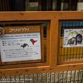 写真: oouchiyama1507120004
