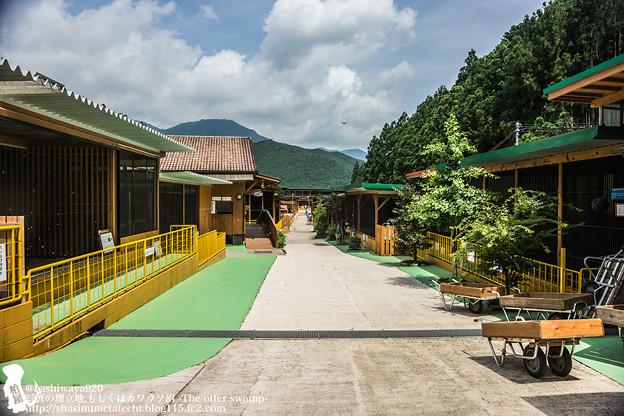写真: oouchiyama1507120009