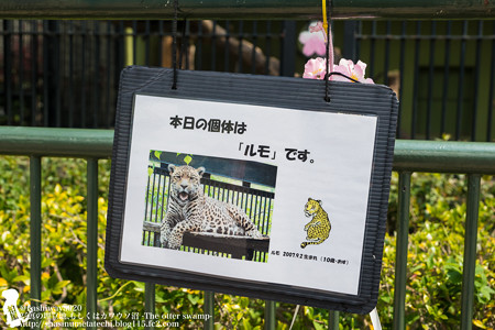 wanparkkouchi180407032