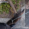 Photos: alohagarden180102460