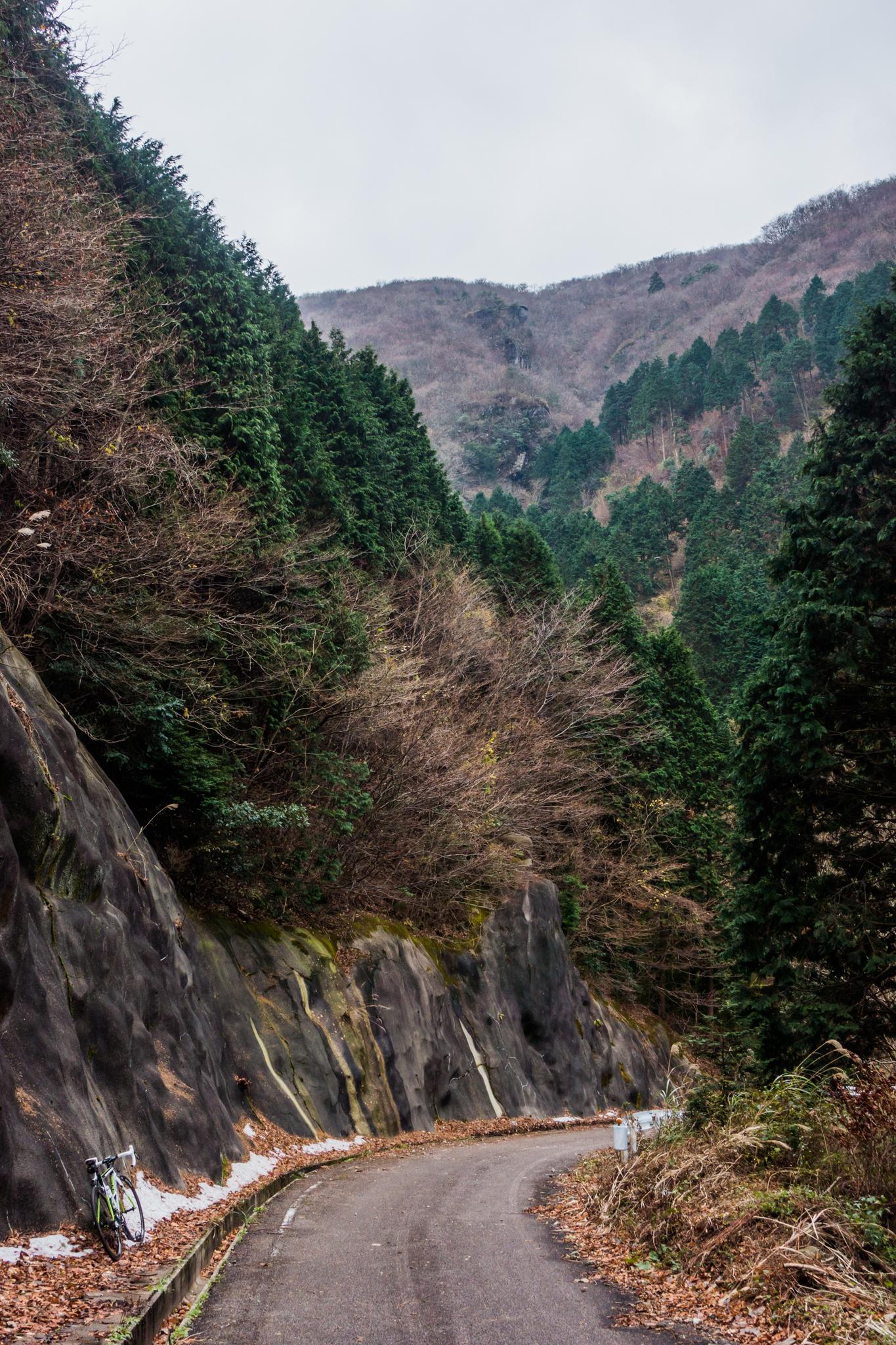 冬景色の林道