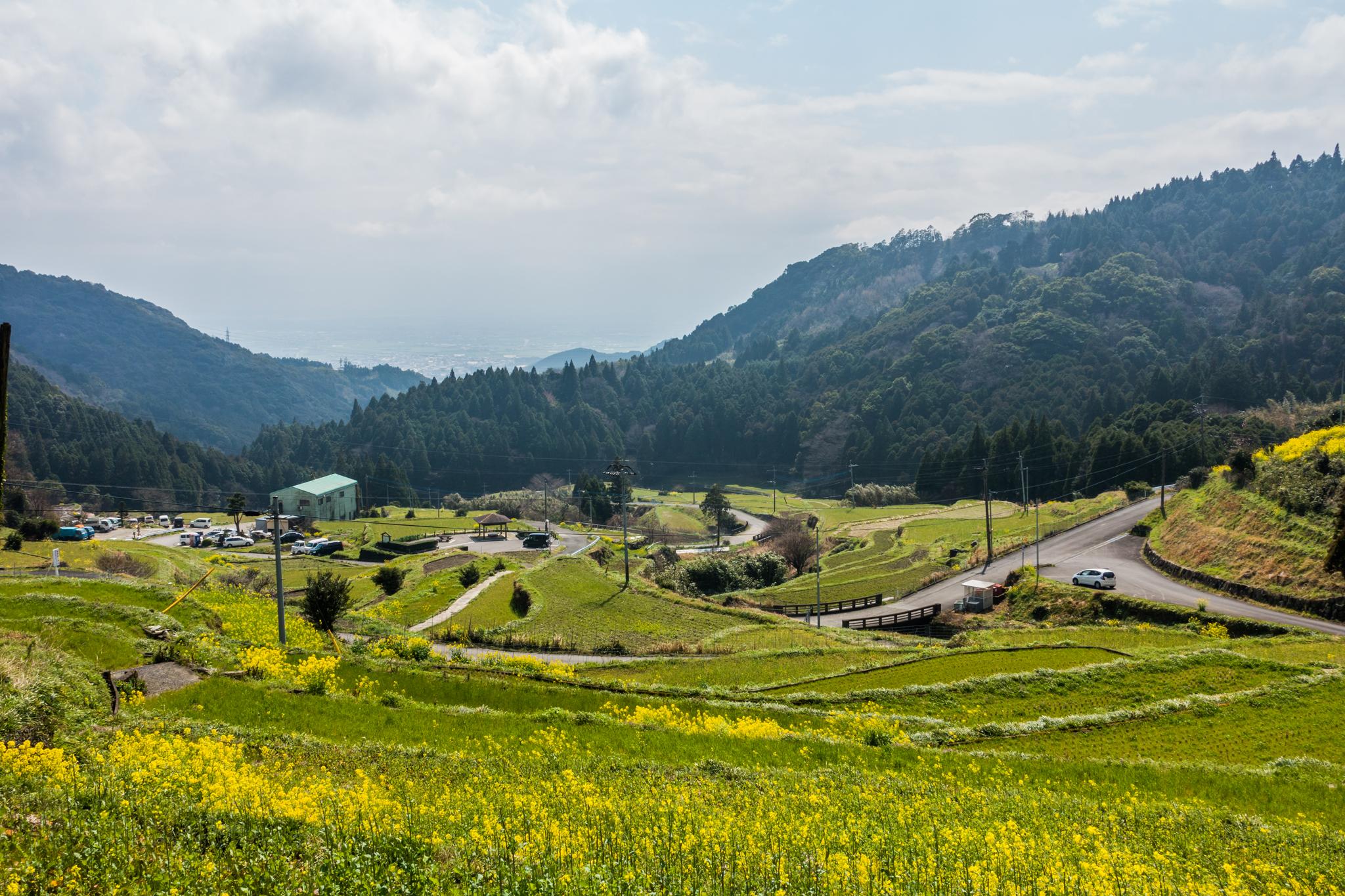 菜の花の江里山棚田