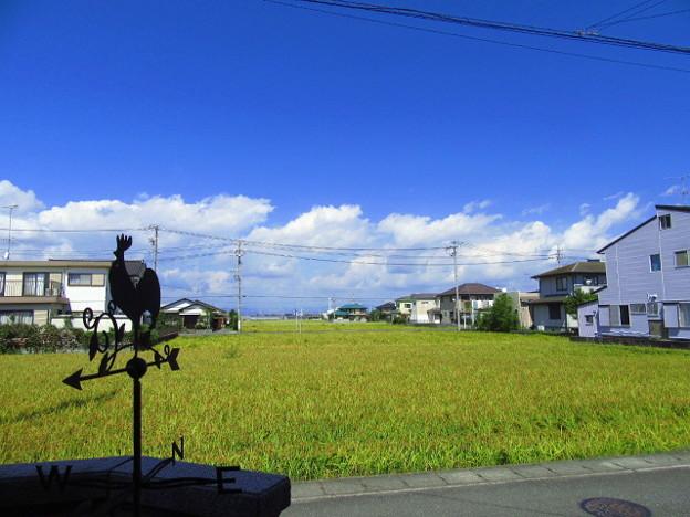 19日のお天気