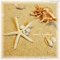 写真: ヒトデ&貝殻ブローチ
