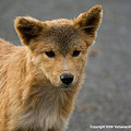 Photos: 野良犬2