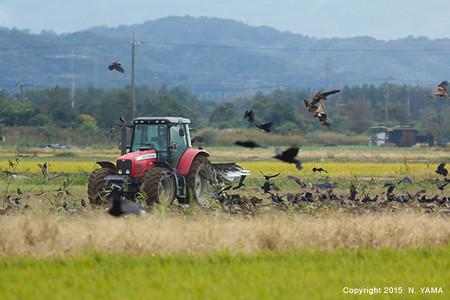 秋耕と鳥の風景
