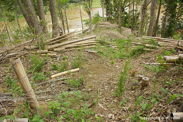 森林管理風景