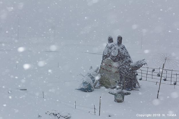 Photos: 宝達トトロの冬