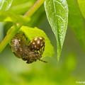 写真: Spiders_0336