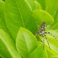 写真: Spiders_0338