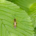 写真: yamanao999_insect2018_118