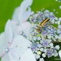写真: yamanao999_insect2018_158