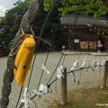 写真: yamanao999_insect2018_227