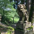 写真: 岩根神社狛犬