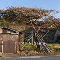 写真: 輪島市門前町七浦