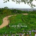 Photos: 卯辰山 眺望の丘
