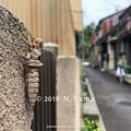 Photos: オニヤンマ